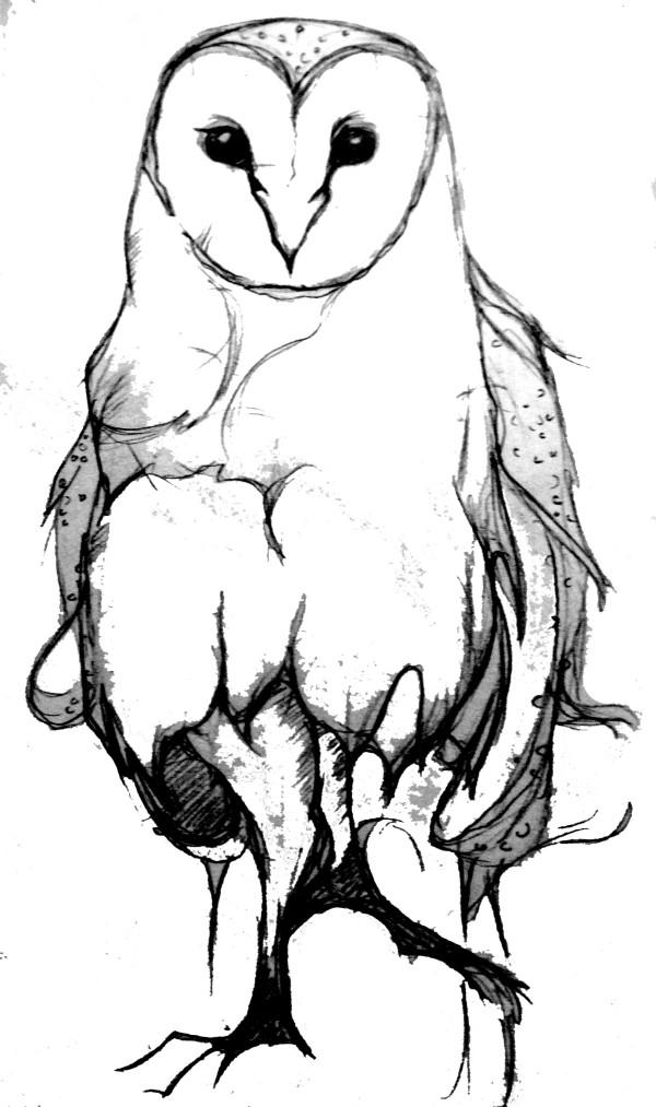 Gemma Rudd owl