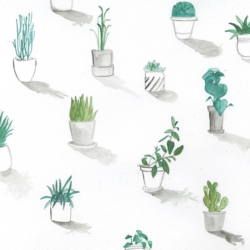 Hannah Bottino Urban Greenery illustrations