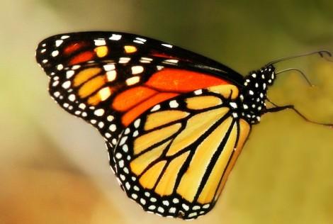 Butterfly 5retouch
