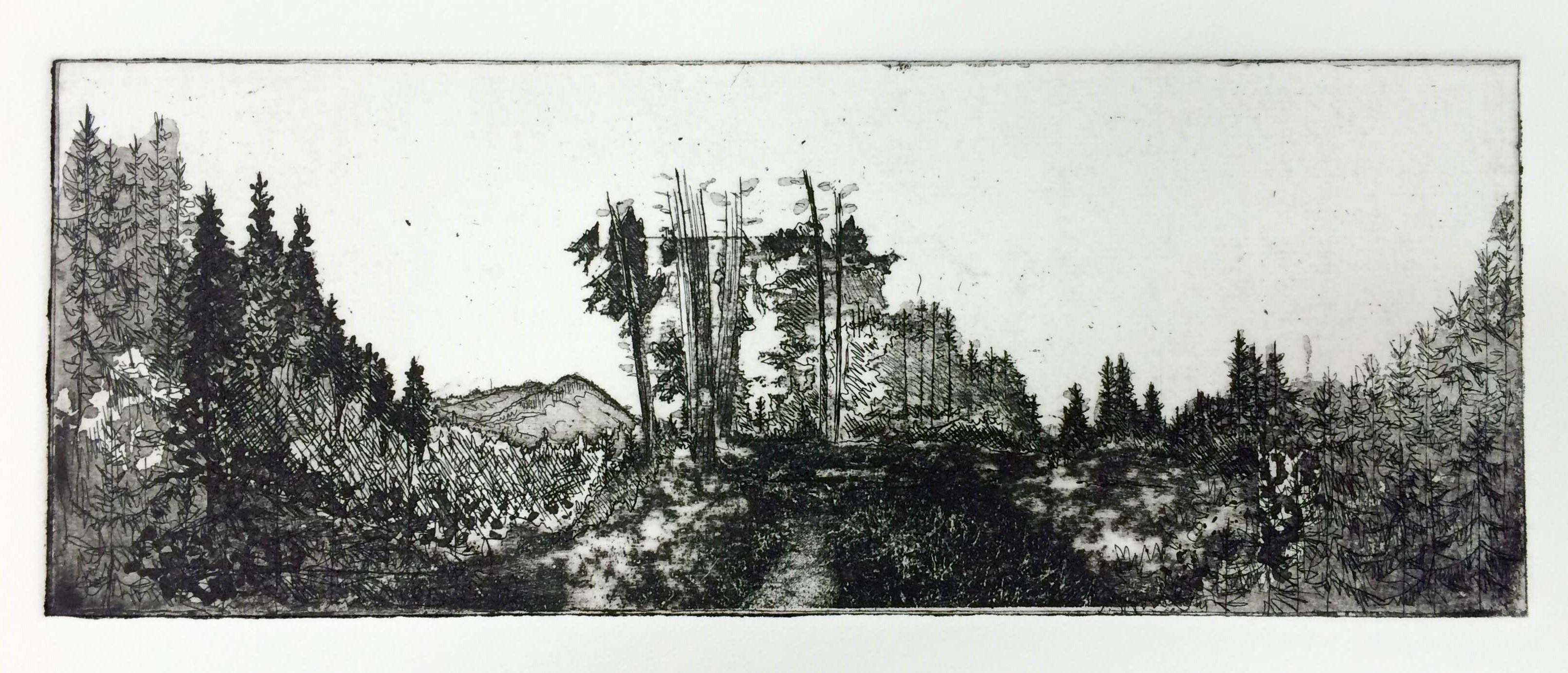 'Hemlock' Hardground, aquatint, sugar lift and photo etching. Image size 20.2x7.5cm