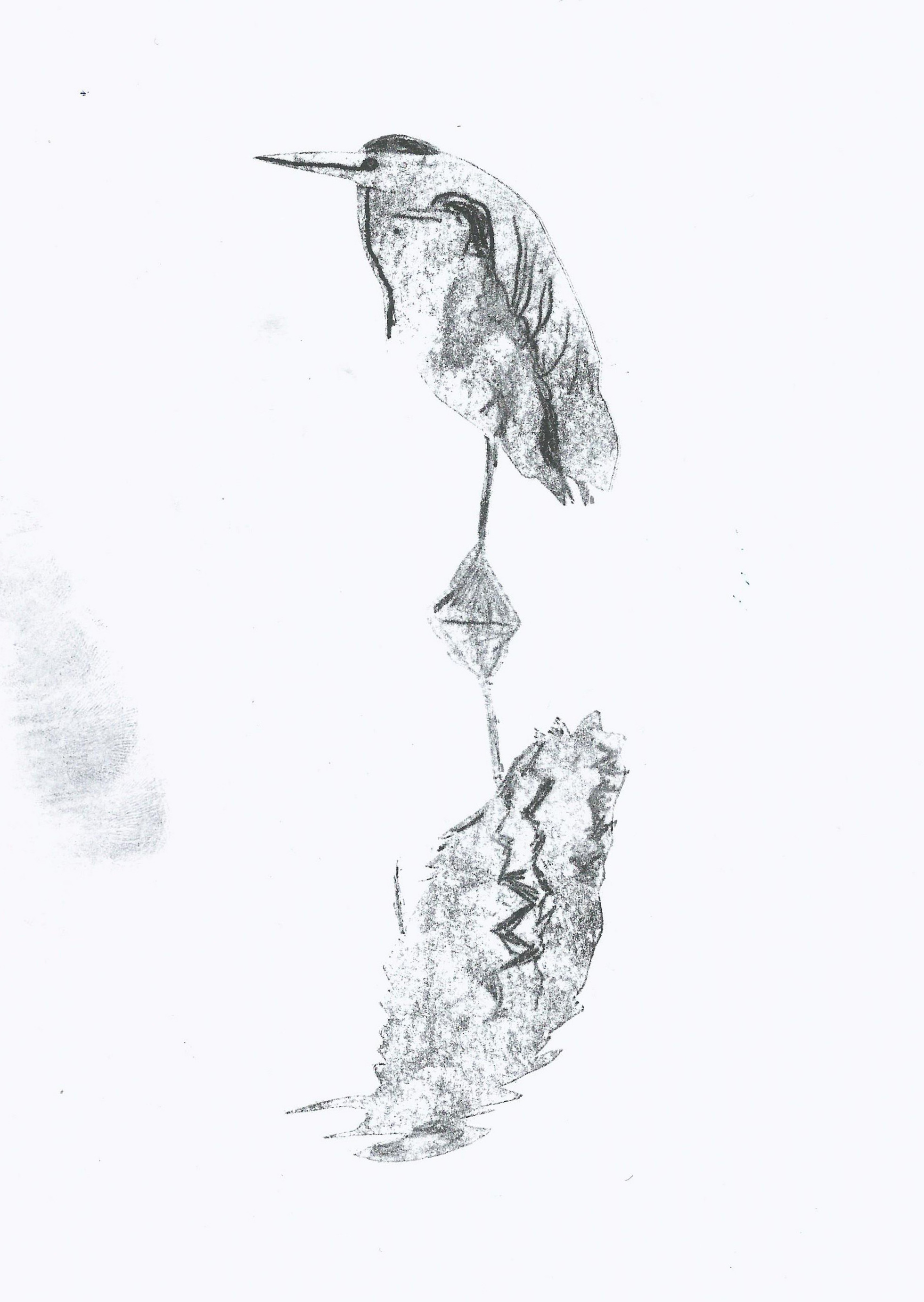 A hand drawn illustration of a bird done with pencil