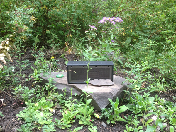 An amplifier sits on a rock, surrounded by greenery