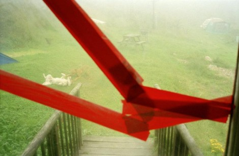 GB. WALES. Druidstone. Dogs playing seen through broken window. 2001