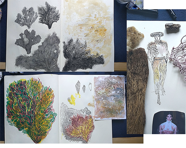 Sketches and illustrations by Valentina on different underwater plants